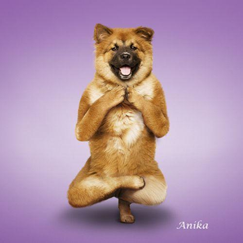 Yoga-dogs-1