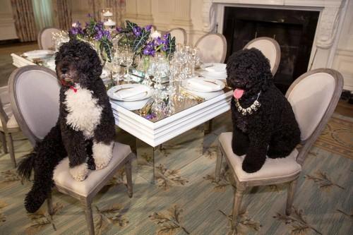 Obama-Dogs-China-Crystal